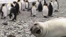Fotoğrafı trolleyen hayvanlar