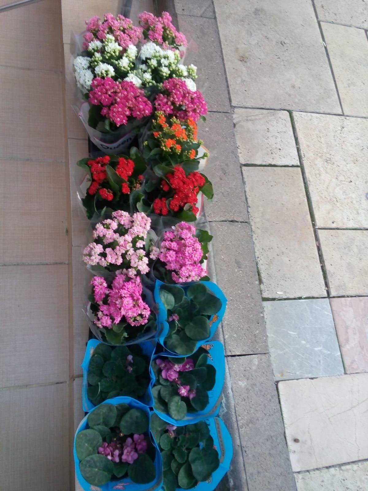 Rengarenk Çiçekçilik